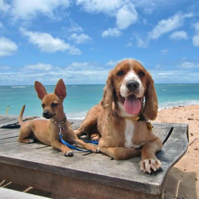 DOG & PUPPY TRAINING OAHU, HAWAII